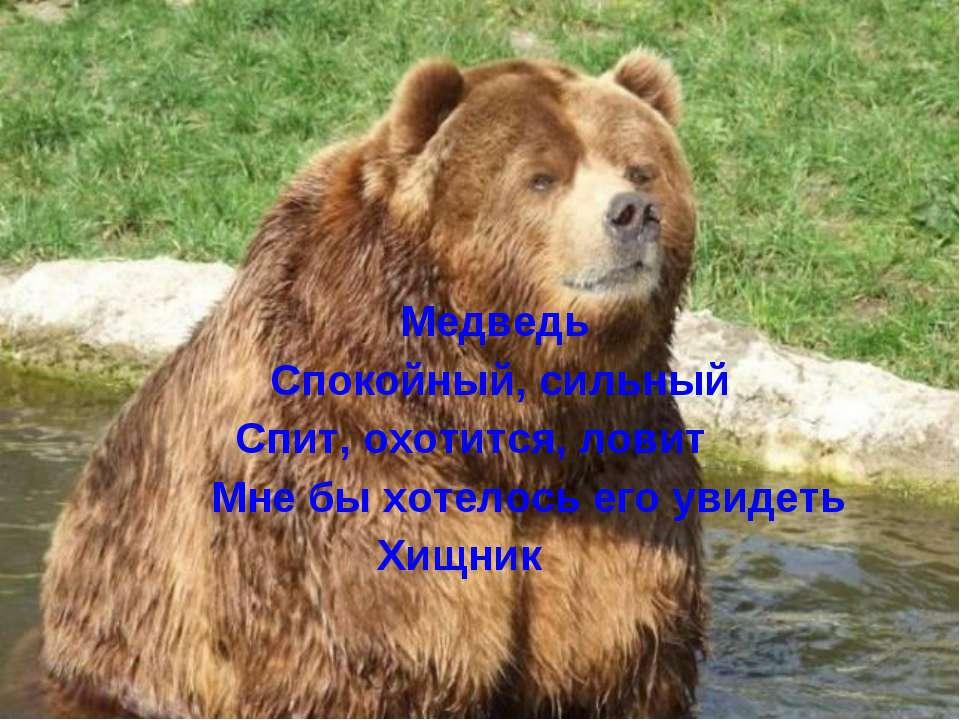 Медведь Спокойный, сильный Спит, охотится, ловит Мне бы хотелось его увидеть ...