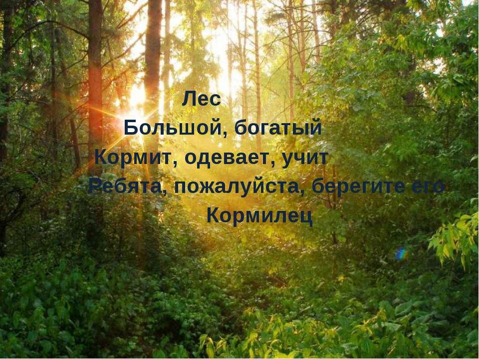Лес Большой, богатый Кормит, одевает, учит Ребята, пожалуйста, берегите его К...