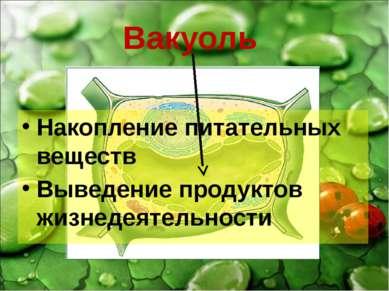 Вакуоль Накопление питательных веществ Выведение продуктов жизнедеятельности