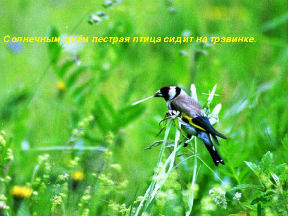 Солнечным днём пестрая птица сидит на травинке.