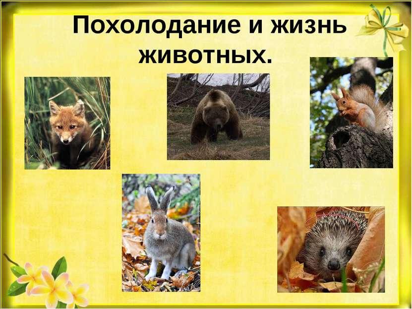 Похолодание и жизнь животных.