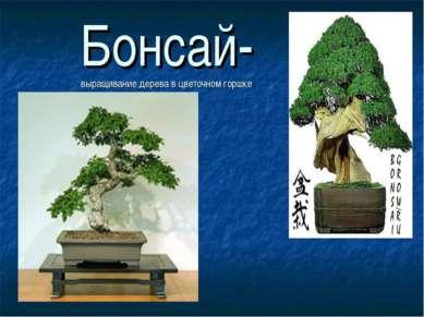 Бонсай- выращивание дерева в цветочном горшке