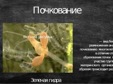 Почкование — вид бесполового размножения аналогичный почкованию многоклеточны...