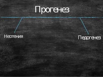 Прогенез Неотения Педогенез