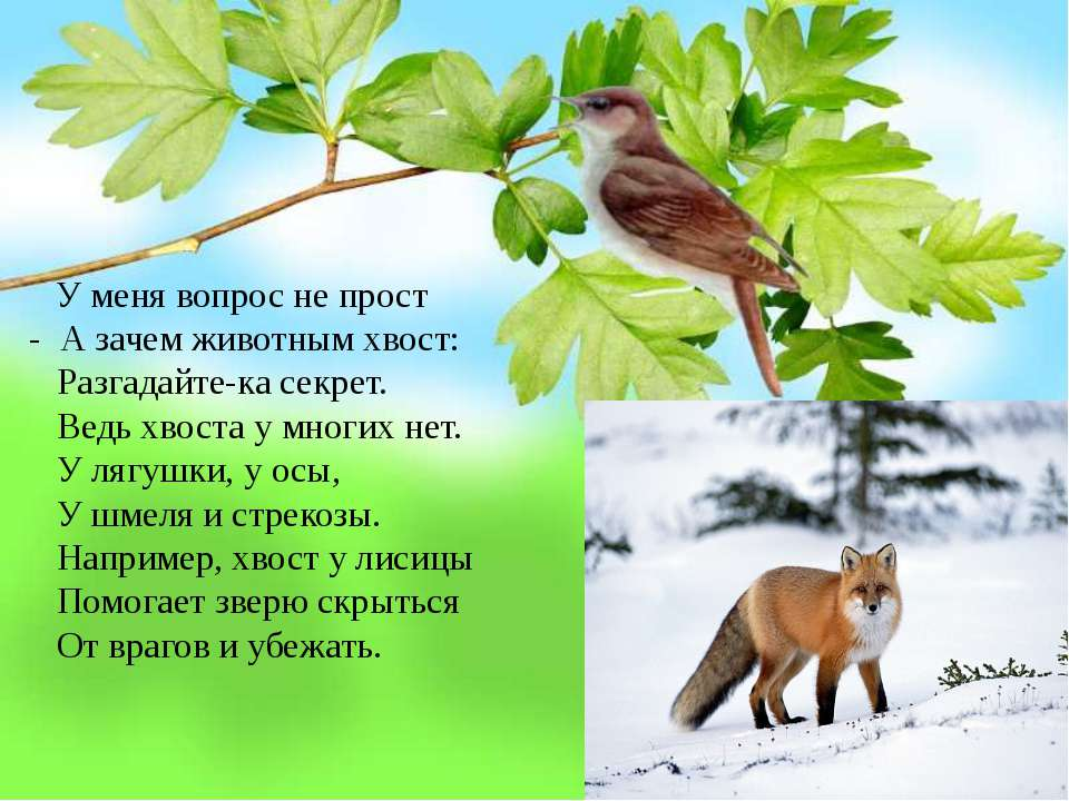 У меня вопрос не прост - А зачем животным хвост: Разгадайте-ка секрет. Ведь х...