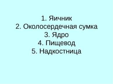 1. Яичник 2. Околосердечная сумка 3. Ядро 4. Пищевод 5. Надкостница