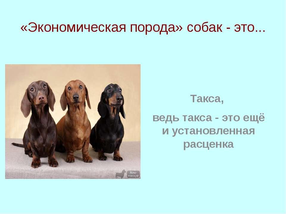 «Экономическая порода» собак - это... Такса, ведь такса - это ещё и установле...