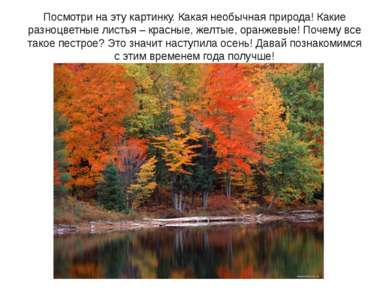 Посмотри на эту картинку. Какая необычная природа! Какие разноцветные листья ...