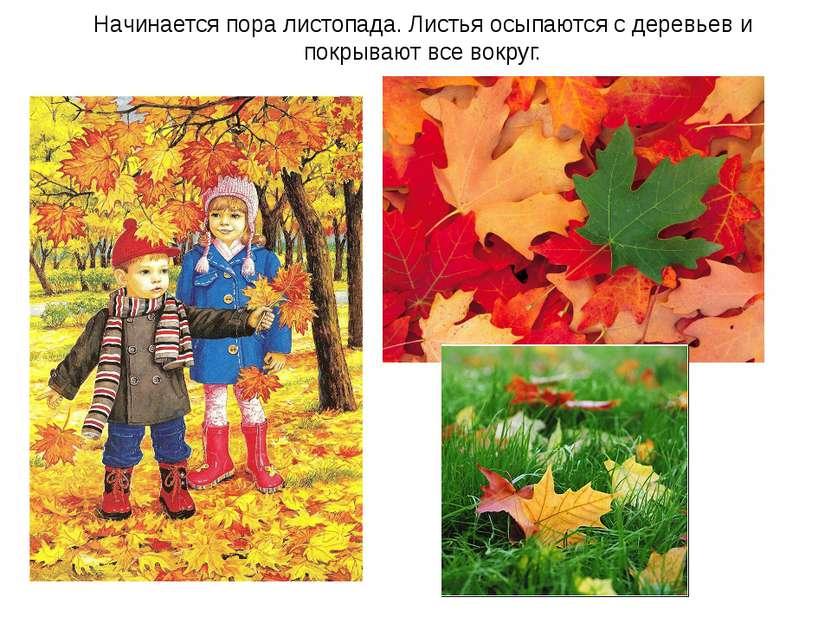 Начинается пора листопада. Листья осыпаются с деревьев и покрывают все вокруг.