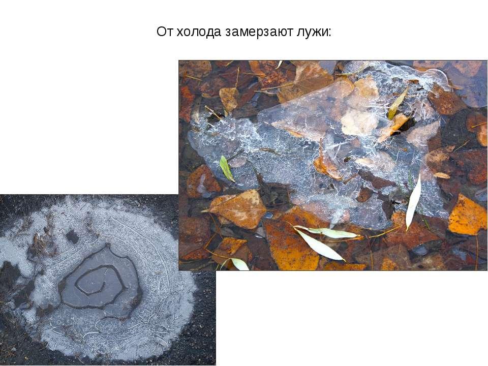 От холода замерзают лужи: