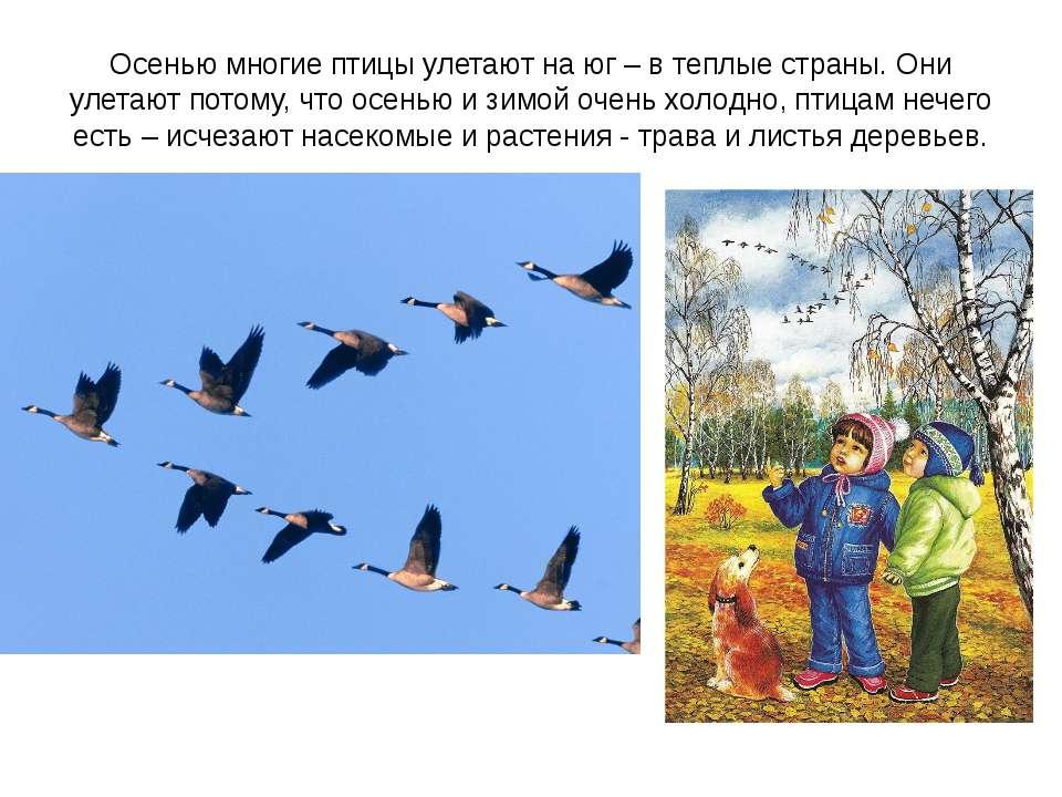 Осенью многие птицы улетают на юг – в теплые страны. Они улетают потому, что ...