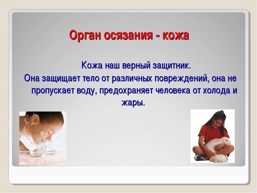 Орган осязания - кожа Кожа наш верный защитник. Она защищает тело от различны...