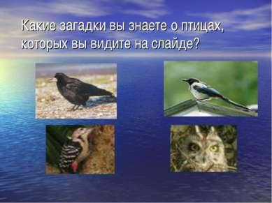 Какие загадки вы знаете о птицах, которых вы видите на слайде?