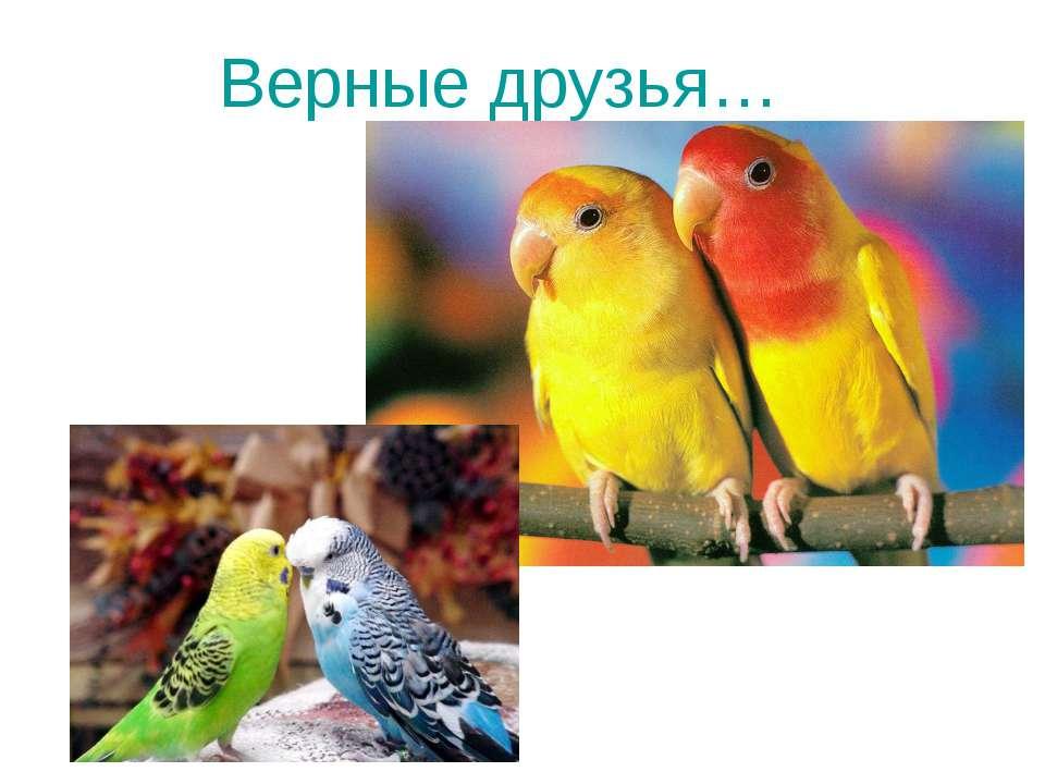 Верные друзья…