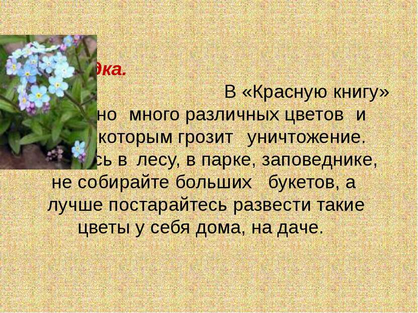 Незабудка. В «Красную книгу» занесено много различных цветов и трав, которым ...