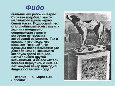 Фидо Итальянский рабочий Карло Сириане подобрал как-то маленького щенка черно...