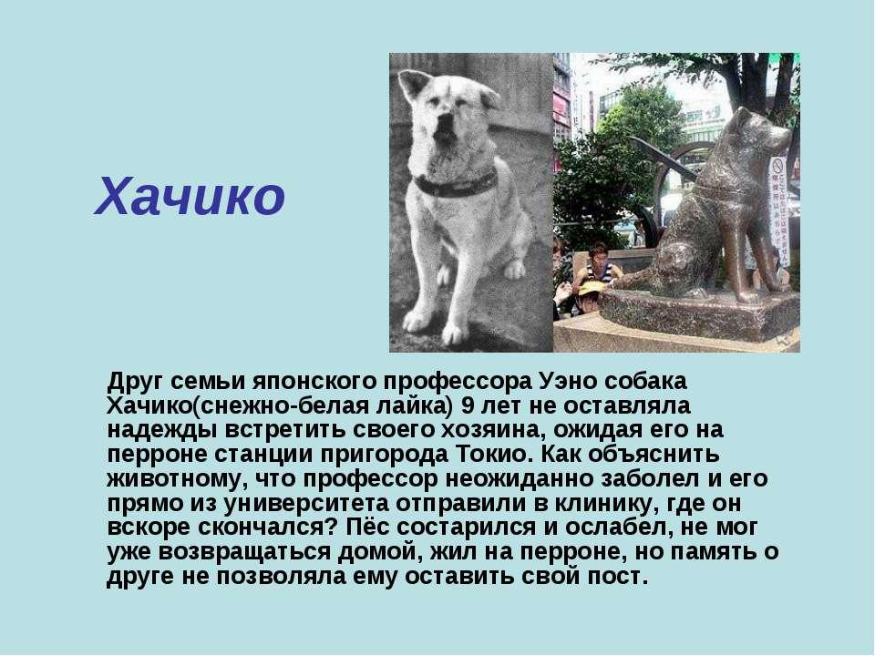 Хачико Друг семьи японского профессора Уэно собака Хачико(снежно-белая лайка)...