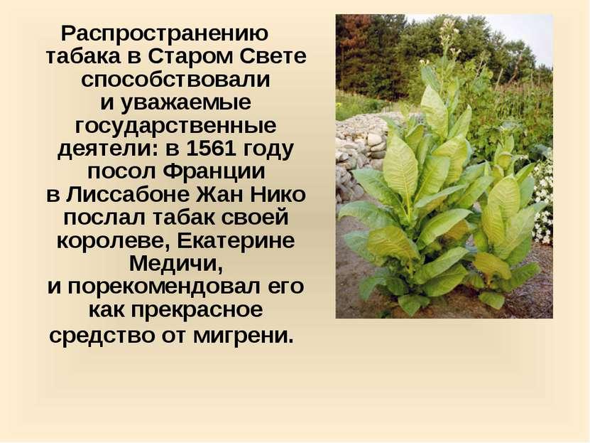 Распространению табака вСтаром Свете способствовали иуважаемые государствен...