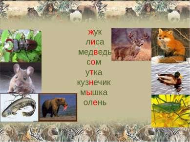 жук лиса медведь сом утка кузнечик мышка олень