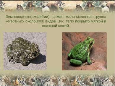 Земноводные(амфибии) –самая малочисленная группа животных- около3000 видов .И...