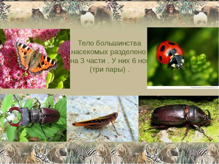 Тело большинства насекомых разделено на 3 части . У них 6 ног (три пары) .