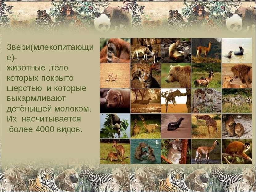 Звери(млекопитающие)- животные ,тело которых покрыто шерстью и которые выкарм...