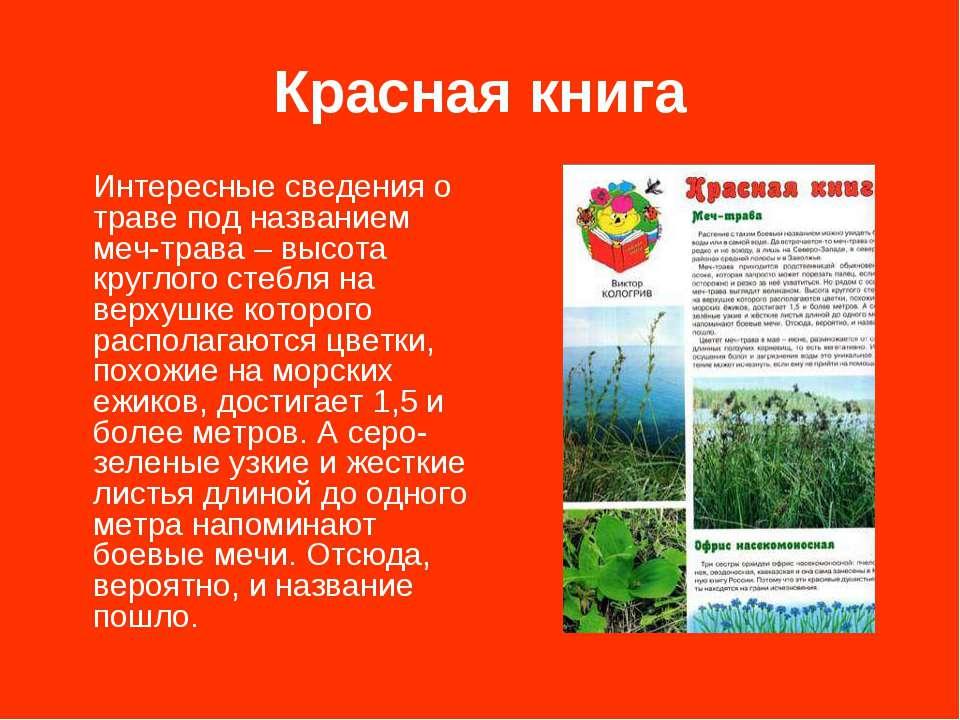 Красная книга Интересные сведения о траве под названием меч-трава – высота кр...