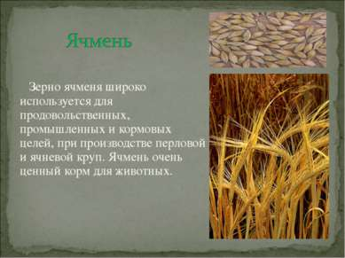 Зерно ячменя широко используется для продовольственных, промышленных и кормов...