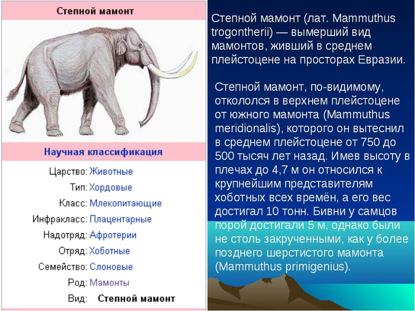 Степной мамонт (лат. Mammuthus trogontherii) — вымерший вид мамонтов, живший ...