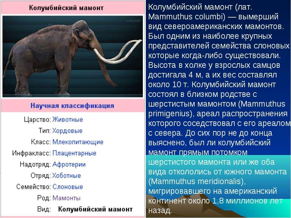 Колумбийский мамонт (лат. Mammuthus columbi) — вымерший вид североамерикански...