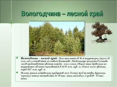 Вологодчина – лесной край Вологодчина - лесной край. Леса занимают 69 % её те...