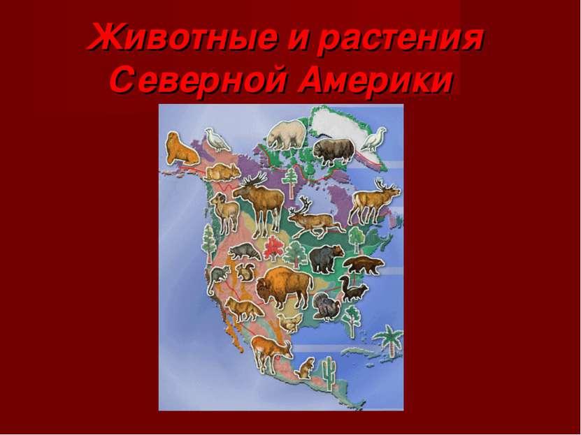 Животные и растения Северной Америки