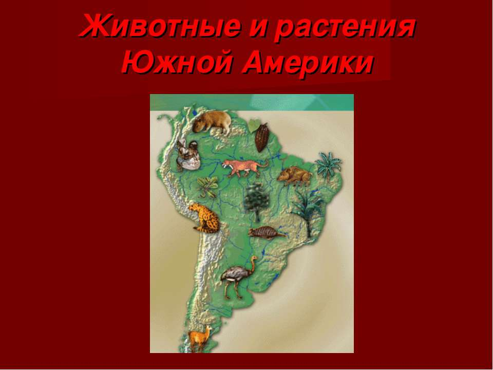 Животные и растения Южной Америки