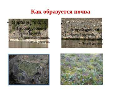 Как образуется почва