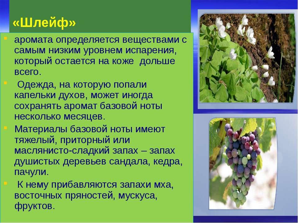 «Шлейф» аромата определяется веществами с самым низким уровнем испарения, кот...