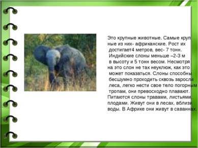 Это крупные животные. Самые круп ные из них- африканские. Рост их достигает4 ...