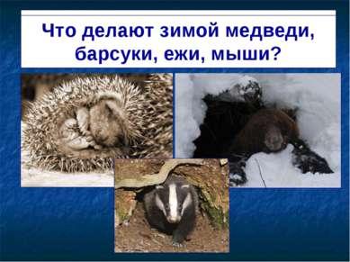 Спят в берлогах и норах медведи, барсуки, ежи, мыши. Что делают зимой медведи...