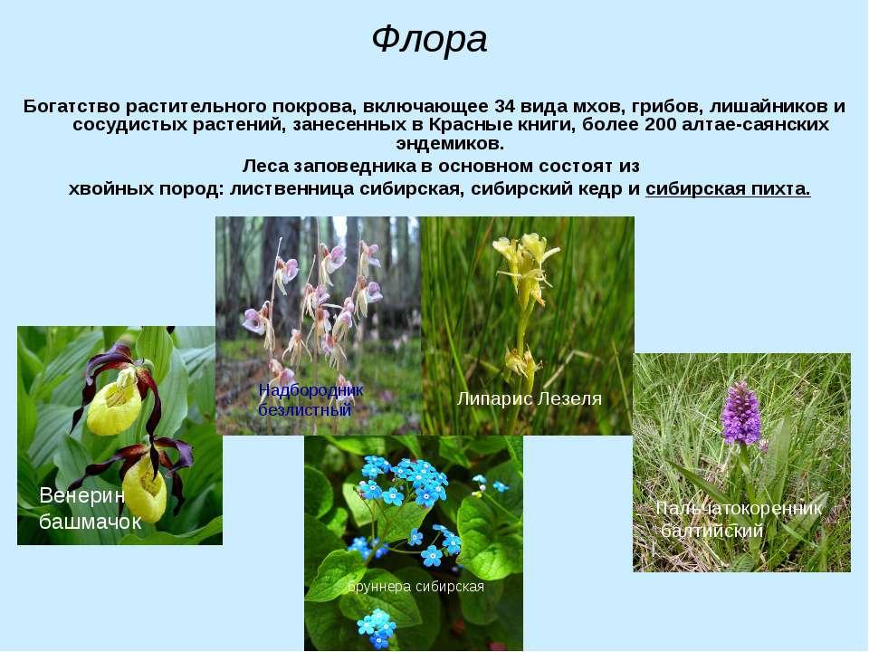Флора Богатство растительного покрова, включающее 34 вида мхов, грибов, лишай...