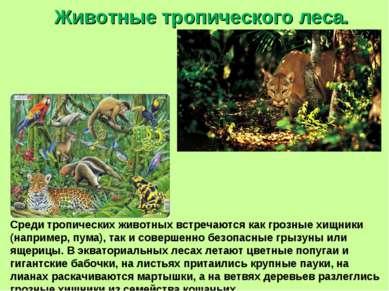 Животные тропического леса. Среди тропических животных встречаются как грозны...
