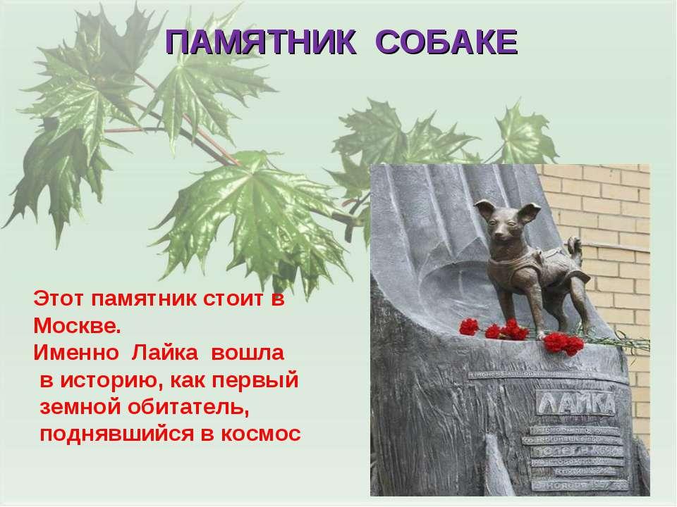 ПАМЯТНИК СОБАКЕ Этот памятник стоит в Москве. Именно Лайка вошла в историю, к...