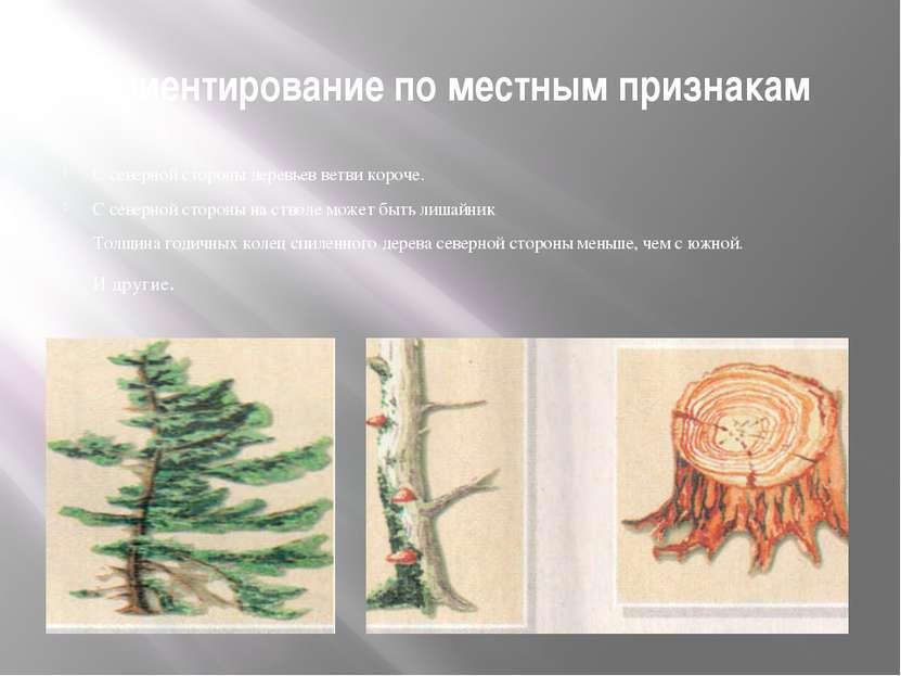 Ориентирование по местным признакам С северной стороны деревьев ветви короче....
