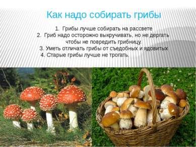 Как надо собирать грибы Грибы лучше собирать на рассвете Гриб надо осторожно ...