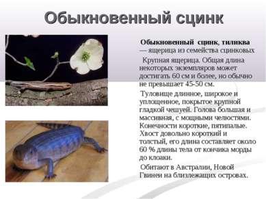 Обыкновенный сцинк Обыкновенный сцинк, тиликва — ящерица из семейства сцинков...