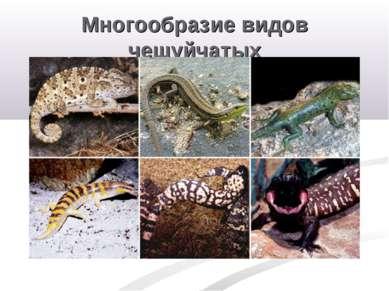 Многообразие видов чешуйчатых
