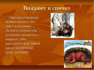 Впадают в спячку Про ежа и медведя можно сказать, что они « кладовые». Летом ...