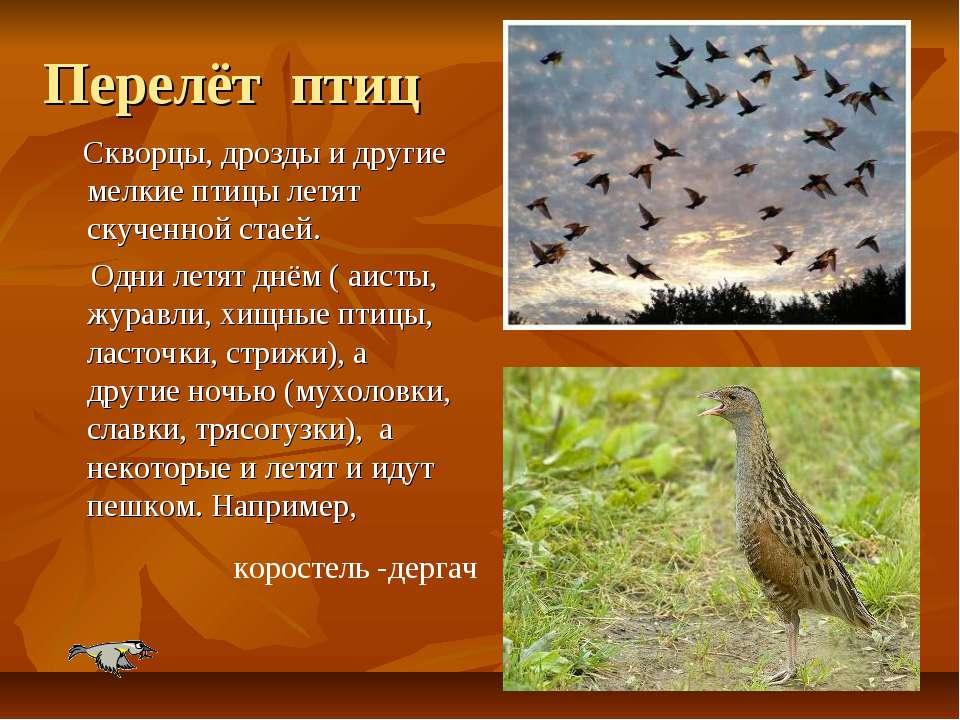 Перелёт птиц Скворцы, дрозды и другие мелкие птицы летят скученной стаей. Одн...