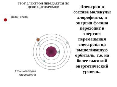 Электрон в составе молекулы хлорофилла, и энергия фотона переходит в энергию ...