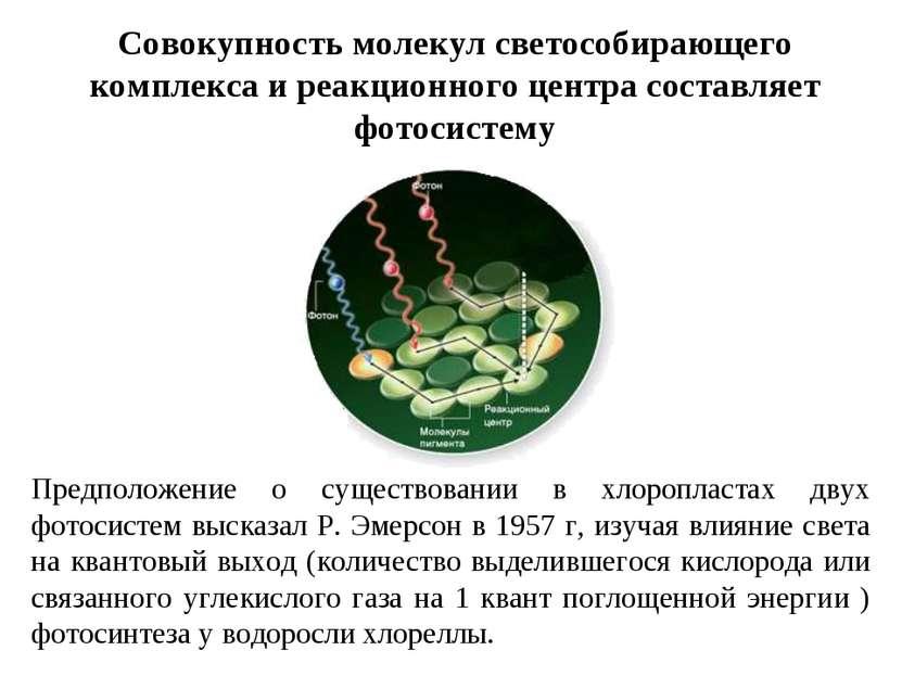 Совокупность молекул светособирающего комплекса и реакционного центра составл...