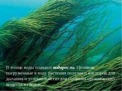 В толще воды плавают водоросли. Целиком погруженные в воду растения получают ...