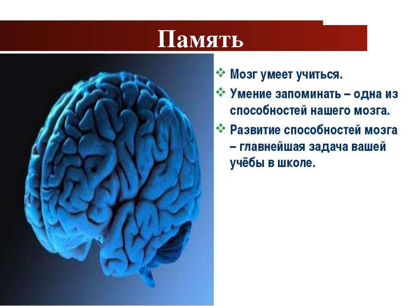 www.themegallery.com Company Logo Память Мозг умеет учиться. Умение запоминат...